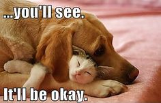 Cat and Dog: It Will be Okay