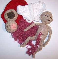 Crochet Baby, Female Pelvis, Placenta, Uterus, and Breasts.