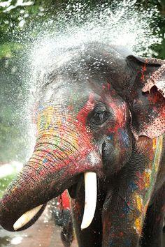 Thai elephant during Songkran festival
