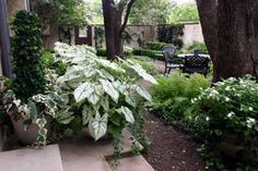 I would like to try this somewhere in my shade garden.   by Lambert Landscape Company