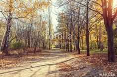 "Download the royalty-free photo ""Colorful autumn landscape alley in the park in the fall sunny day.  Coloring and processing photo."" created by Victoria Kondysenko at the lowest price on Fotolia.com. Browse our cheap image bank online to find the perfect stock photo for your marketing projects!"
