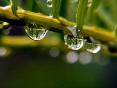 ▶ Chopin's Raindrops - YouTube