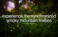 Experience the Synchronized Smoky Mountain Fireflies