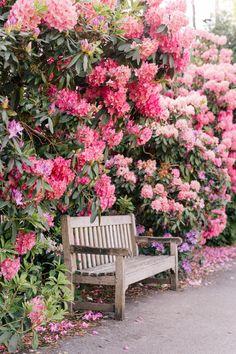 Rhododendron heaven at Hampstead Heath, London. Kensington Palace Gardens, Rhododendron, Gazebos, Hampstead Heath, Gal Meets Glam, Kew Gardens, Flower Farm, London Travel, Land Scape