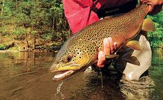 Secrets for Catching Bigger Trout on Local Streams | Field & Stream