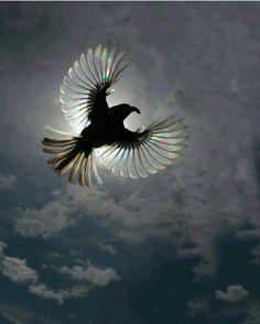 Beautiful wings. - Imgur
