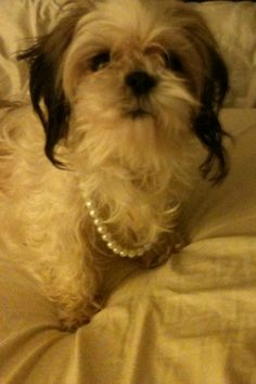Puppy and pearls