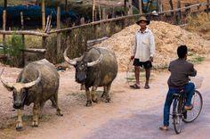 Village life in Kong Lo, Laos
