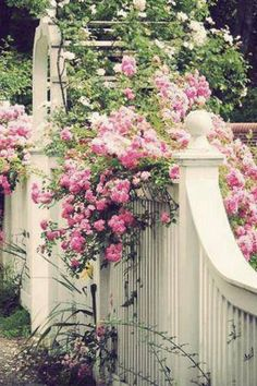 """A fence and gate that say, """"please come in""""!  Curves, solid structure....strong and delicate...balanced. Love, love, love!"""