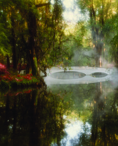 Magnolia Plantation and Gardens in Charleston, SC