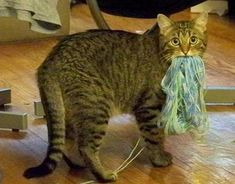 What? I was just going to knit you some slippers...