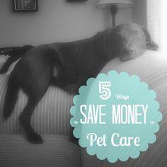The Kolb Corner   5 Ways to Save Money on Pet Care   http://thekolbcorner.com