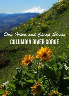 Columbia River Gorge: Cheap Sleeps and Wildflower Hikes Oregon Waterfalls, Oregon Trail, Oregon Coast, Evergreen State, Oregon Washington, Columbia River Gorge, Pacific Northwest, Pacific Coast, Day Hike