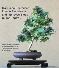 Cannabis and High Blood Pressure