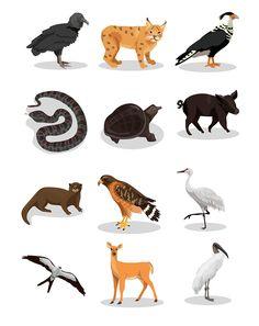 kerry hyndman, animals, digital, graphic, textures, bold