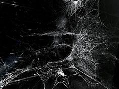 """Jochen Ebmeier: """"Network neuroscience""""."""