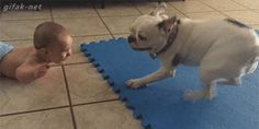 video:   Baby Thinks Spinning French Bulldog is Hilarious