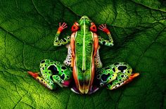 Six examples of incredible body art that will blow your mind - clue: This isn't really a frog