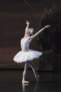 Heather Ogden in Swan Lake. Photo by David Cooper