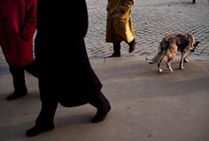 All Creatures Great and Small | Steve McCurry   Moscow, Russia