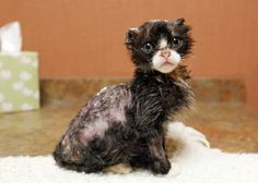Story of Burned Kitten Will Make You Hate People, Then Love People. I almost cried! :// Poor kitty!