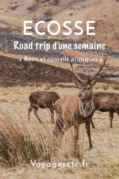 Que faire en 1 semaine de road trip en Ecosse ? Un classique : ile de Mull, île de Skye, Loch Torridon sans oublier Glencoe. Récit et conseils pratiques de ce sublime voyage #ecosse #roadtrip