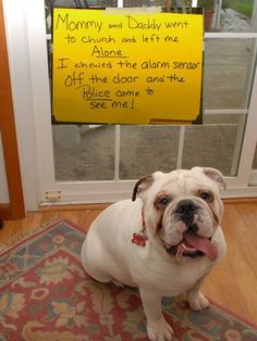 Dog Shaming features the most hilarious, most shameful, and never-before-seen doggie misdeeds. Join us by sharing in the shaming and laughing as Dog Shaming reminds us that unconditional love goes both ways. Funny Animal Memes, Dog Memes, Cute Funny Animals, Funny Animal Pictures, Funny Cute, Funny Dogs, Funny Memes, Animal Pics, Funny Puppies