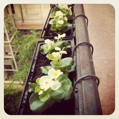 Spring gardening in the balcony http://ladiy.cafeblog.hu #DIY #blooming #flowers #spring #inspiration