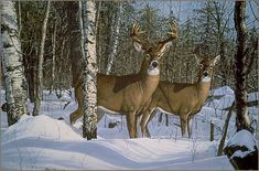 whitetail deer in snow - painting by Bruce Miller Hunting Art, Deer Hunting, Hunting Signs, Wildlife Paintings, Wildlife Art, Deer Paintings, Deer Pictures, Deer Pics, Life Pictures