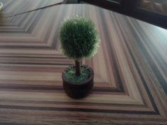 Pohon ini @Fortu Coffee, Gading Serpong