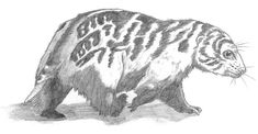 This picture was drawn for the Allocene project and shows one of the descendents of the modern day Australian wild dog. I had this idea due to three reasons: 1) the existence of striped wild dogs i...