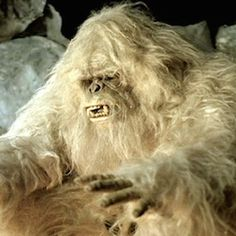 The Koyal Group Info Mag Review: Yeti's a Bear, Say Scientists, But What Kind?-In legend, Yeti is a huge and furry human-resembling creature also referred to as the Abominable Snowman, but in science, Yeti is just a bear.