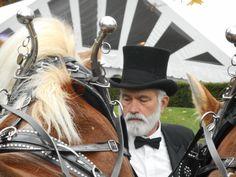 Wedding Carriage, Horse Drawn, Farm Wedding, Special Events, Riding Helmets, Horses, Fashion, Moda, Fashion Styles