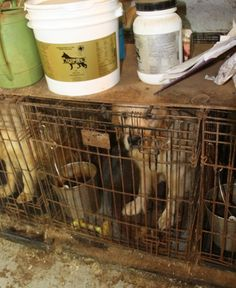 Quick links to share the petition: Revoke license of Farmington Hills Puppy Mill, one of the worst in the US! | Yousign.org