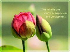 La mente es la fuente de la felicidad y la infelicidad. / The mind is the source of happiness and unhappiness. - Buddha