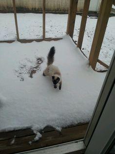 Destiny in the snow