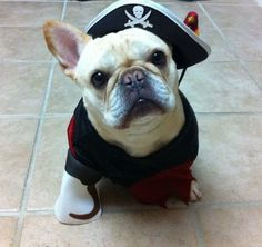 Gracie as a pirate!