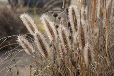Lovely winter seedhead combo (via Rhone Street Gardens)