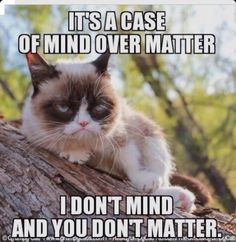 grumpy cat memes - Saferbrowser Yahoo Image Search Results - Tap the link now to see all of our cool cat collections! Grumpy Cat Quotes, Grump Cat, Funny Grumpy Cat Memes, Cat Jokes, Funny Animal Memes, Funny Animal Pictures, Funny Animals, Funny Memes, Funniest Animals