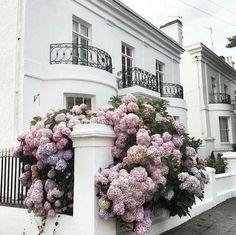 Flowers // beautiful