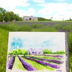 Sketching at Terre Bleu lavender farm today. 💜 Do you know there is a lavender farm near Toronto? Their lavender ice cream is super yummy.💜🍦💜 Watercolour on hot press paper, Arches. Watercolour, Watercolor Paintings, Lavender Ice Cream, Urban Sketchers, Did You Know, Sketching, Toronto, Sketchbook Ideas