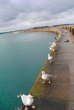 Seagulls, Saint-Malo, France