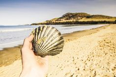 Travelling tourists in detail with male hand examining the intricate lines and sandy details of a scallop shell found on a Southern Tasmanian seaside. Seven Mile Beach, Lauderdale, Australia by Ryan Jorgensen
