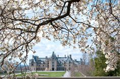 The Bilmore Estates, Asheville, NC. One of my favorite visits that takes you to another place in time Biltmore Estate, Biltmore Nc, English Landscape Garden, American Mansions, France, Historic Homes, Places To See, Asheville Nc, Beautiful Places