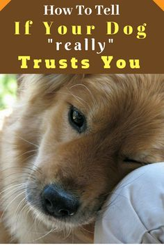 The level of love and trust you feel toward your dog is no different than what you feel toward any other family member. Here's how to tell if your dog trusts you. Love My Dog, Dog Care Tips, Pet Care, Cute Puppies, Dogs And Puppies, Doggies, Coconut Oil For Dogs, Dogs Trust, Dog Information