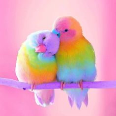 Two love birds. Cute Birds, Pretty Birds, Beautiful Birds, Animals Beautiful, Love Birds Pet, Cute Baby Animals, Animals And Pets, Funny Animals, Exotic Birds