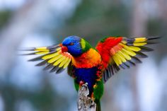 The rainbow lorikeet shows us how color blocking is really done.