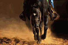 Robert Dawson - The Reiner - Horse Print - Canvas Options