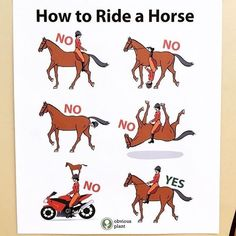 The most important role of equestrian clothing is for security Although horses can be trained they can be unforeseeable when provoked. Riders are susceptible while riding and handling horses, espec… Funny Horse Memes, Funny Horse Pictures, Funny Horses, Cute Horses, Funny Animal Memes, Cute Funny Animals, Funny Equine, Horse Humor, Animal Humor