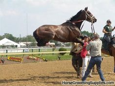 Resultado de imagen para thoroughbred horse